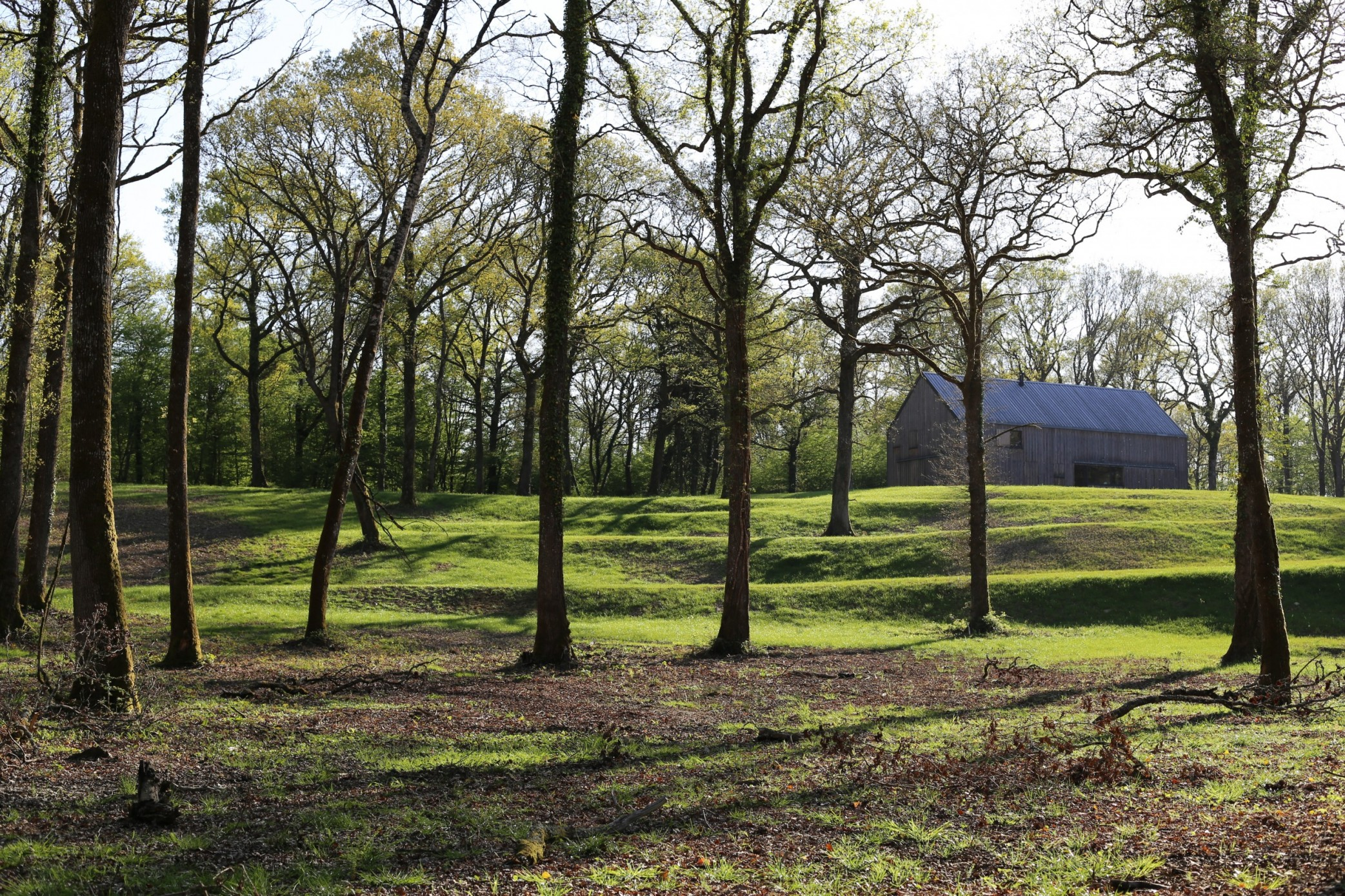 chatillon en bazois - forêt de dély