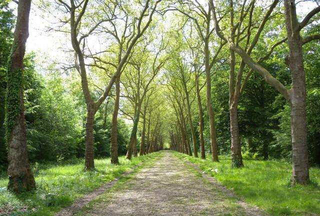 forêt de ferrières - diagnostic paysage, écologie et fréquentation